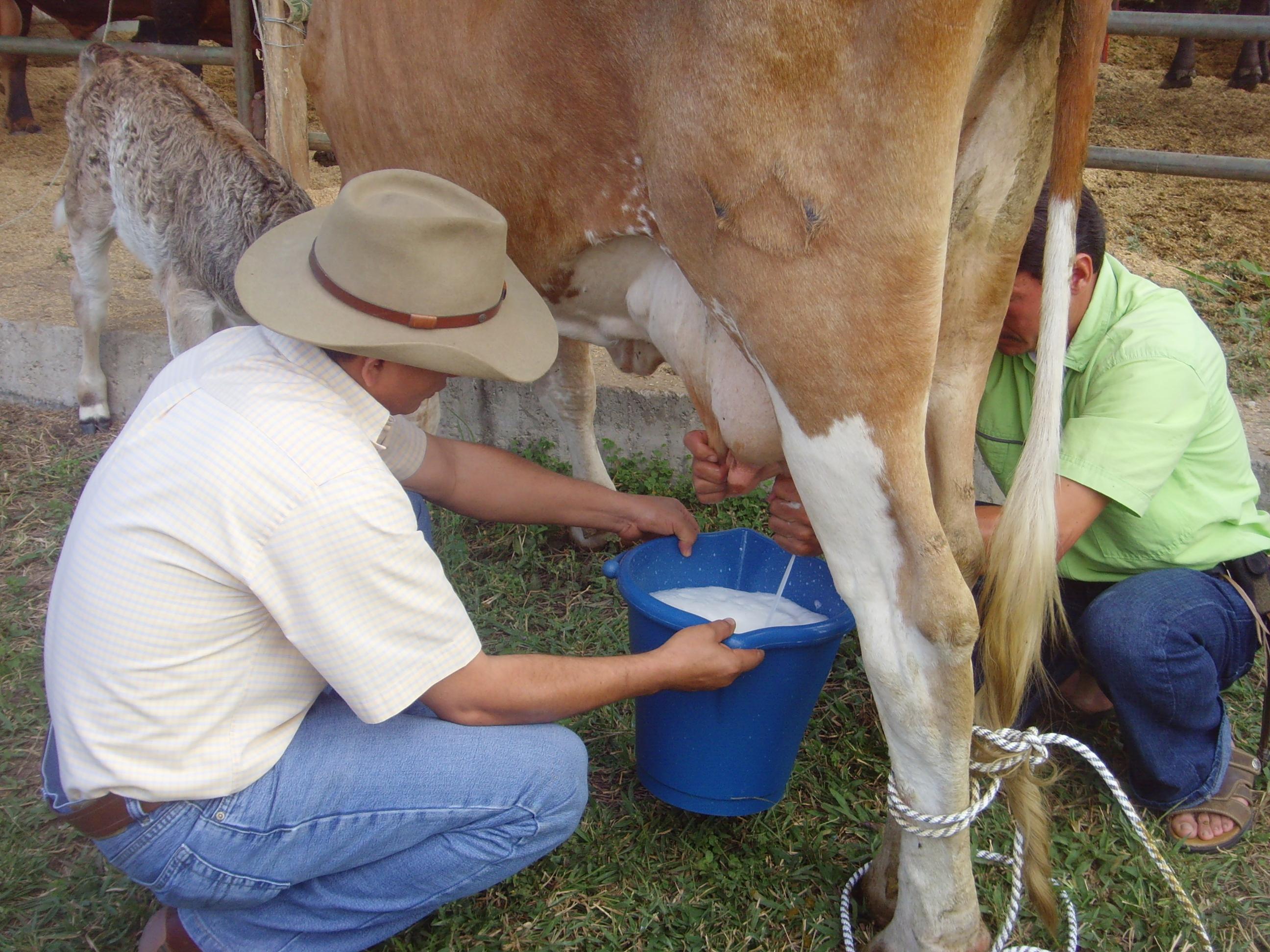 Sacando la leche