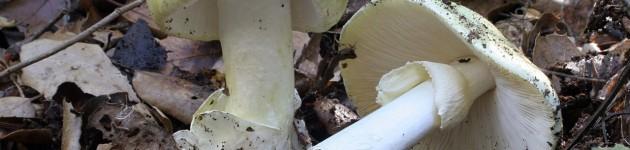 Dos turistas internados tras comer hongos silvestres en Los Reartes